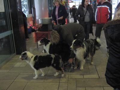 Psi so prihajali s svojimi gospodarji na razstavo. Med njimi so bili tudi trojčki.