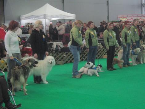Tačke pomagačke, psi terapevti s svojimi vodniki.
