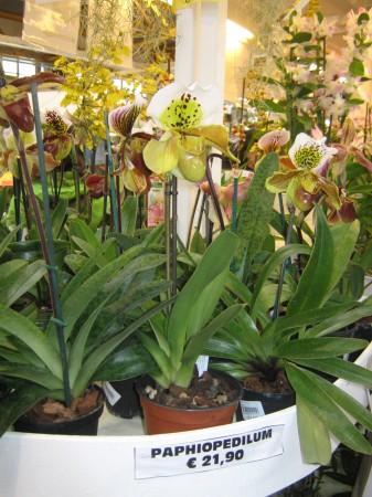 Orhideje so bile zastopane v vseh barvah