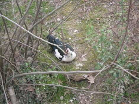 Ob reki Noncello živijo različne vrste ptic