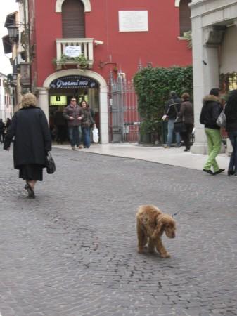 Italijani obožujejo pse, jaz tudi. Na vsakem koraku kakšnega srečaš.