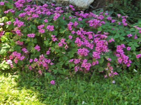 Cvetlični vrt turistične kmetije Štern na Pohorju