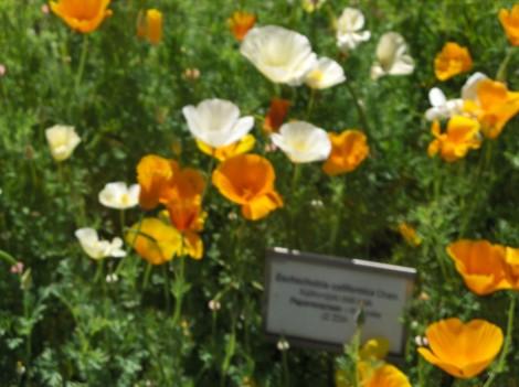 Cvetlični del Botaničnega vrta UM