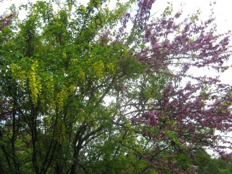 Navadni nagnoj (rumeni cvet) in navadni jadikovec (viola cvet)