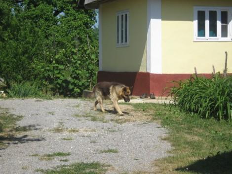 Na naši poti nas je spremljala pasja vročina.