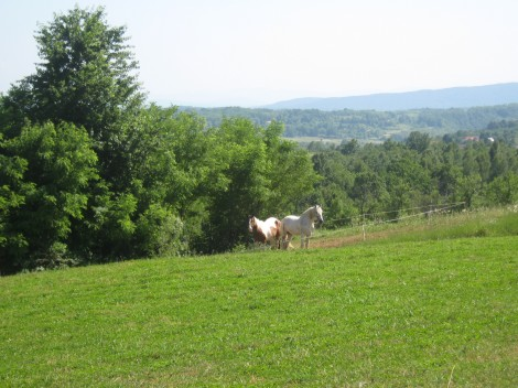Konja sta nas radovedno opazovala, mi pa njiju, prava lepotca sta.