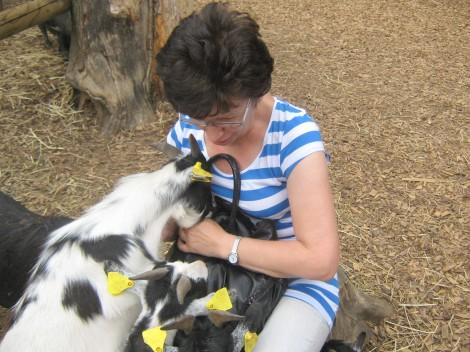 Živalski vrt Ljubljana, kjer ti kozice poskušajo vzeti rogljiček iz torbe.