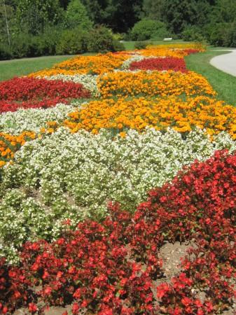 """Cvetoče """"polje"""" v parku Tivoli."""