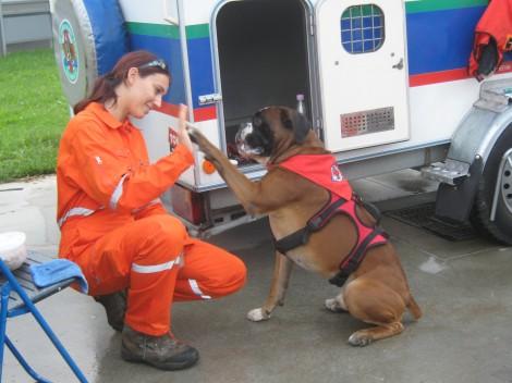Reševalec Ben, buldog, ki je z veseljem vsakega, ki je imel pet minut časa, pošteno poslinil.