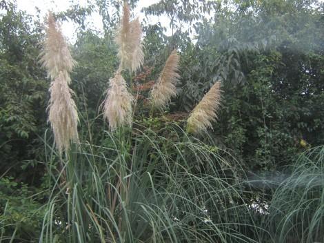 Rastline v Safari parku