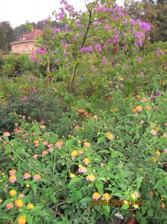 Spreminjevalka in bugenvilija, sosedi v botaničnem vrtu.