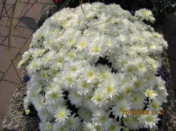 Cel Minimundus je poln rož.