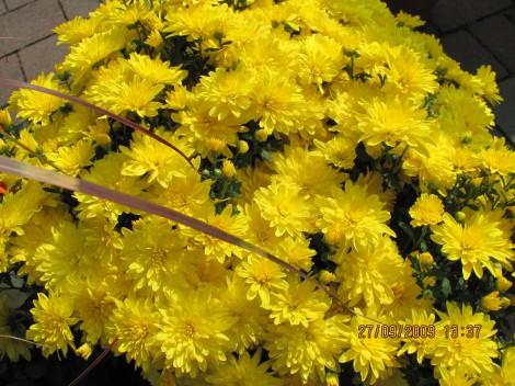 Lepota v rumenem