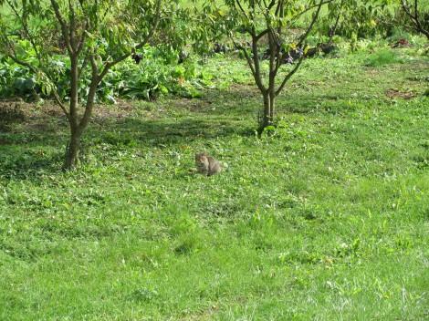 Maček počiva na sončnem travniku.