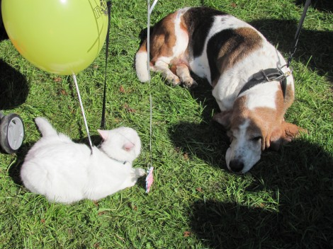 Pes in maček, najboljša prijatelja.