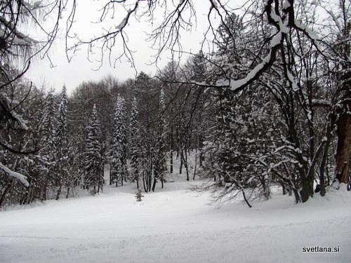Zasneženi gozd v središču Ljubljane, park Tivoli