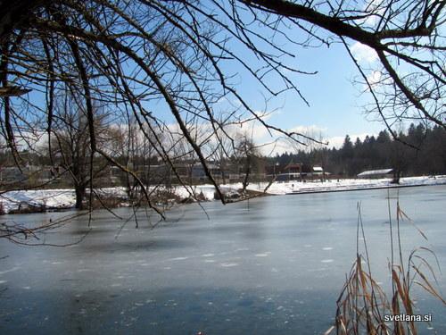 Polovica Koseškega bajerja je pokrita z ledom. Na tem delu je veliko rac mlakaric. Labodi so raje na sončni strani bajerja