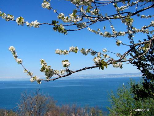 Pogled z Belvederja na Tržaški zaliv.