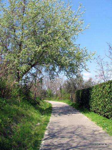 Izola, Parenzana, nekoč ozkotirna železnica, danes sprehajalna in kolesarska pot.