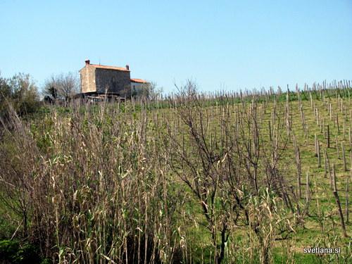 Kamnita istrska hiša z vinogradom