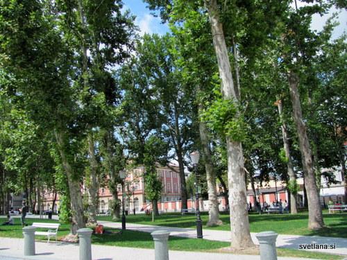 Platane v parku Zvezda je dal zasaditi arhitekt Jože Plečnik, prvotno so bili zasajeni kostanji