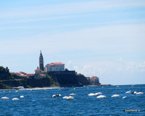 Pogled iz Strunjana na Piran in gojišče školjk