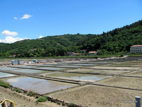Strunjanske soline so bile zgrajene v naplavni ravnici potoka Roja